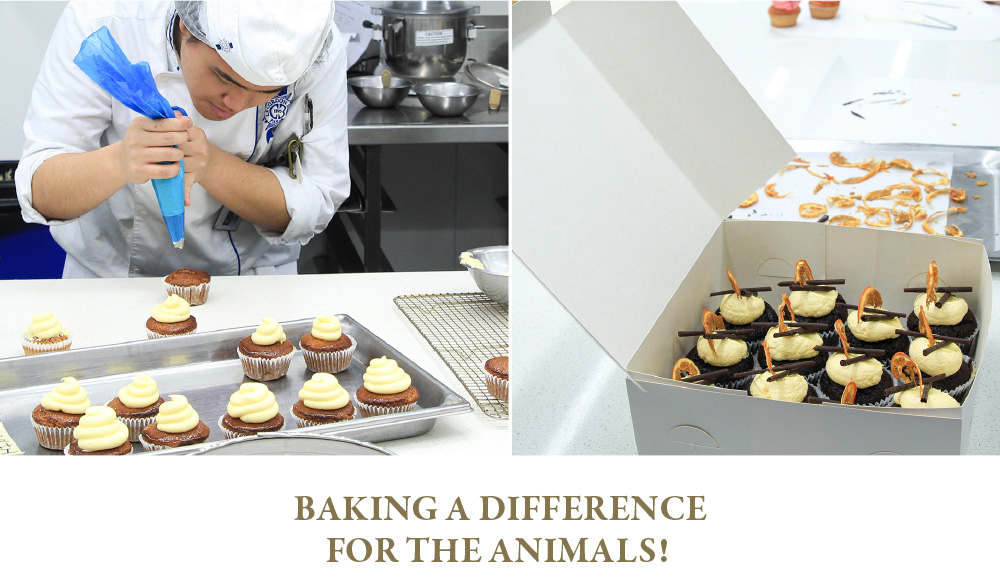 Baking a difference for the animals!